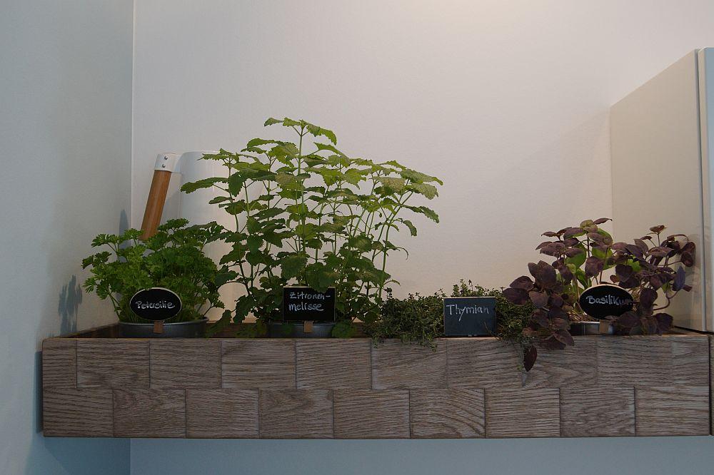 Kleiner Lifehack in der Küche: Der eigene Kräutergarten. Der muss aber gepflegt werden. (Foto: Markus Burgdorf)
